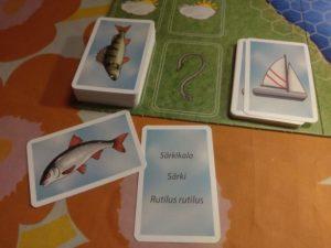 Lajikortit asetetaan kalankuvalla merkittyyn paikkaan laudalle eläinkuva ylöspäin.